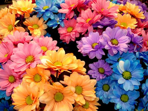 Kwiaty obraz #1021