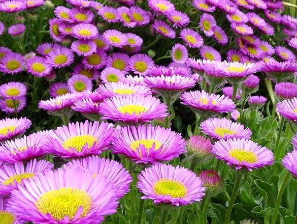 Kwiaty obraz #1024