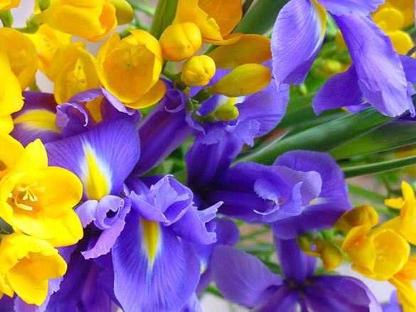 Kwiaty obraz #1026