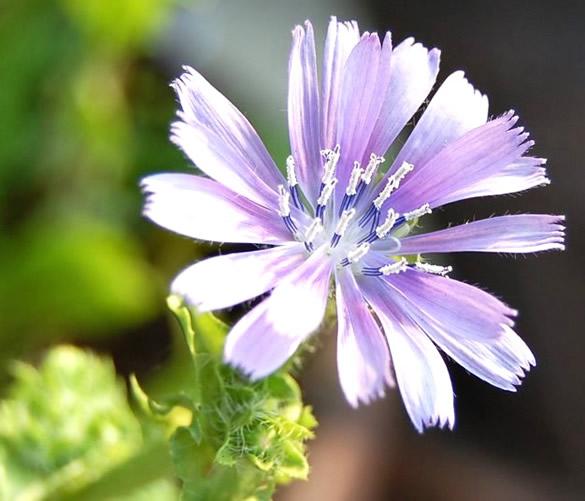 Kwiaty obraz 10