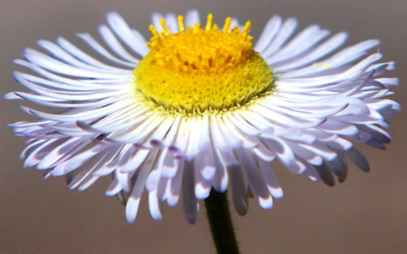 Kwiaty obraz 4