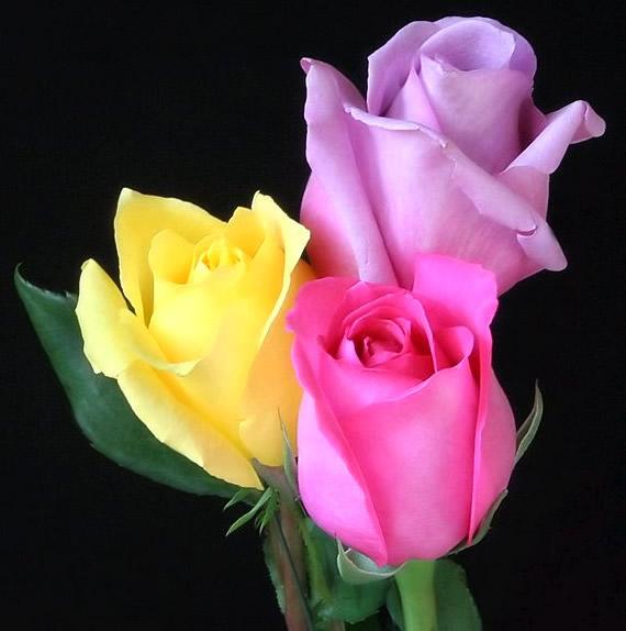 Kwiaty obraz #1040