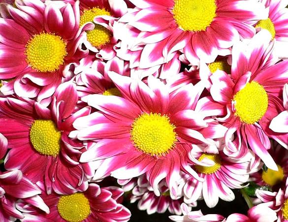 Kwiaty obraz 5