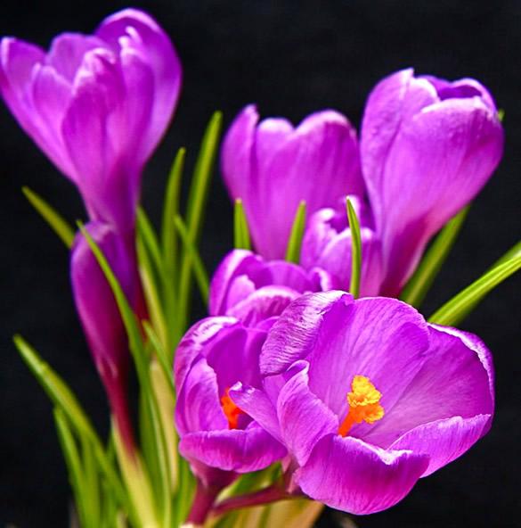 Kwiaty obraz 13