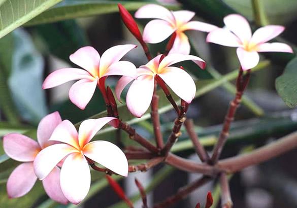 Kwiaty obraz 15