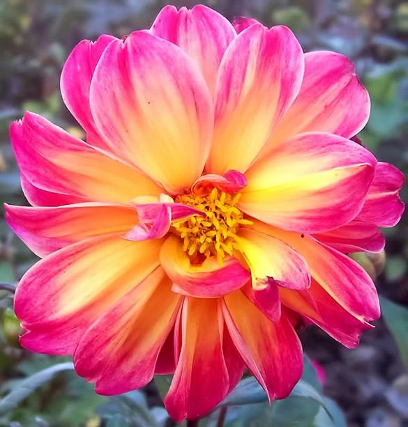 Kwiaty obraz 2