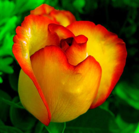Kwiaty obraz #1086