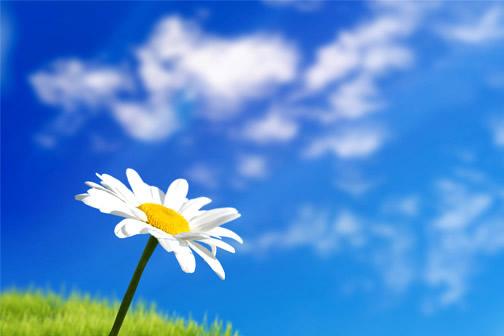 Kwiaty obraz 12
