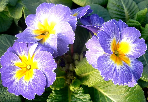 Kwiaty obraz 14