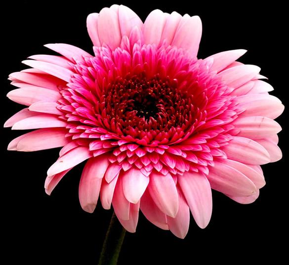 Kwiaty obraz 1
