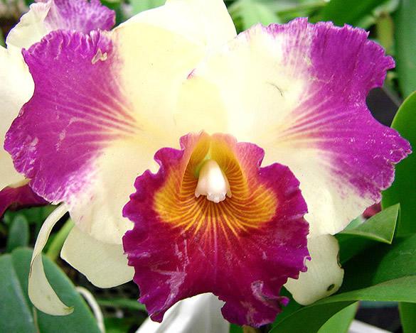 Kwiaty obraz 7