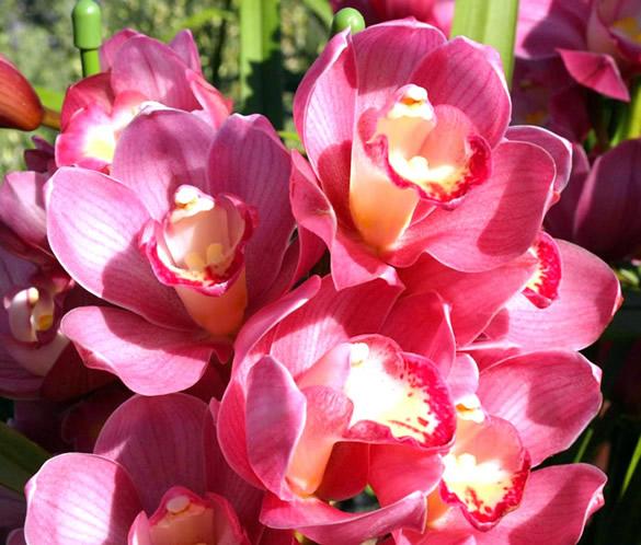 Kwiaty obraz 6