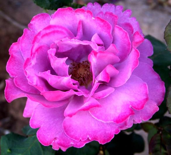 Kwiaty obraz 11