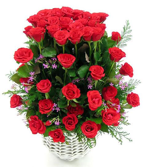 Róże obraz #1236