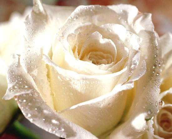 Róże obraz 4