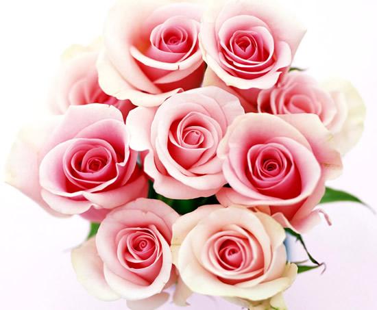 Róże obraz #1245