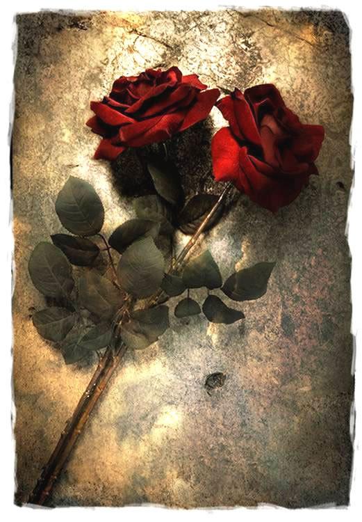 Róże 9