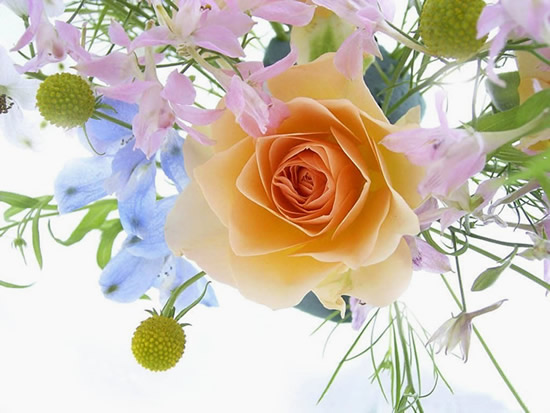 Róże 13