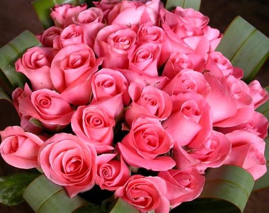 Róże 14