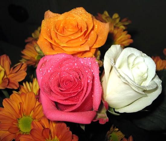 Róże 10