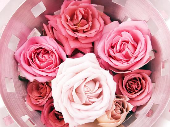 Róże obraz 8