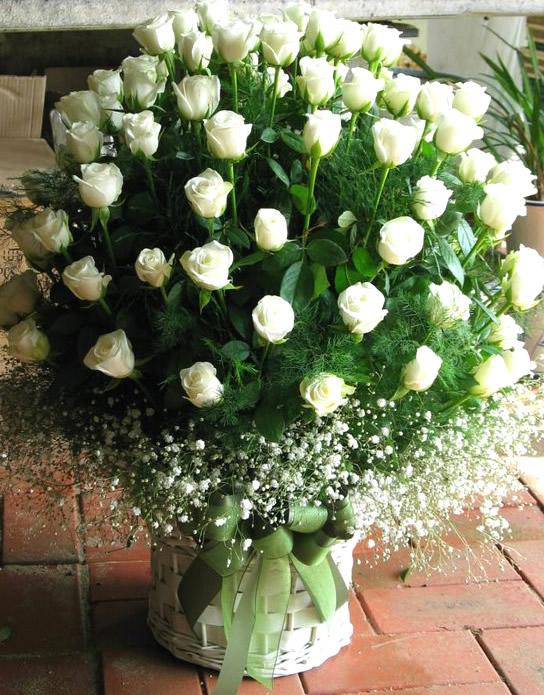 Róże obraz 11
