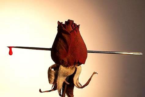 Róże obraz 14