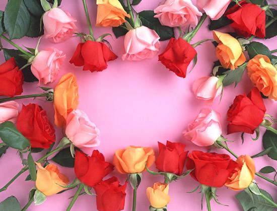 Róże 7